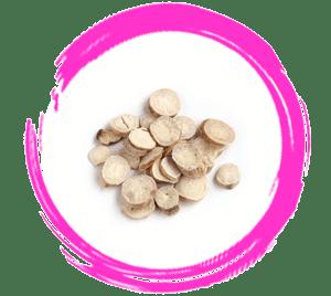 Confinement Herbs White Dahlia Root Bai Shao